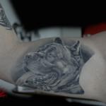 Cane corso realistico in bianco e nero tatuato nell'interno braccio. Eseguito dua anni fa!!