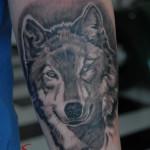 Tattoo lupo interno avambraccio in bianco e nero